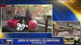 Goodbye Bei Bei! Week of farewell celebrations continue for National Zoo's giant panda