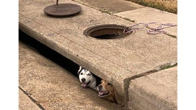 Dogs rescued after getting stuck in storm drain in Carrollton