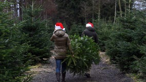 Here's what you can do with your Christmas tree after the holidays