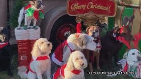 Cuteness Overload! Therapy dogs -- decked out in holiday best -- pose for adorable photo shoot
