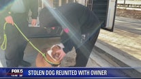 Stolen bulldog reunited with owner