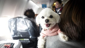 Airlines could ban emotional-support animals under Transportation Department's proposed rule change