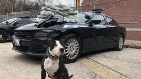 K9 Jet, a former shelter dog, makes big drug bust