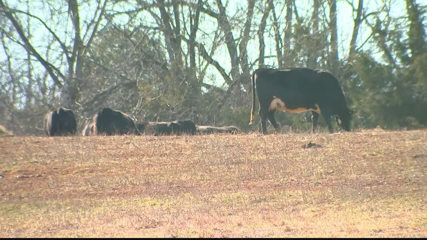 Northern Virginia farmer says cow killer knew what he was doing