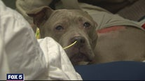 Northern Virginia family reunited with dog after fire