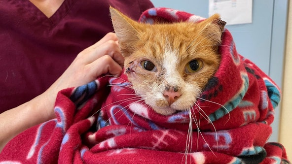 Donations pour in for cat recovering after being struck by arrow, Arlington County animal advocates say