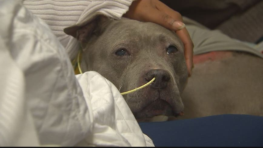 Miracle pup: Dog reunited with family after nearly dying in Fairfax County house fire