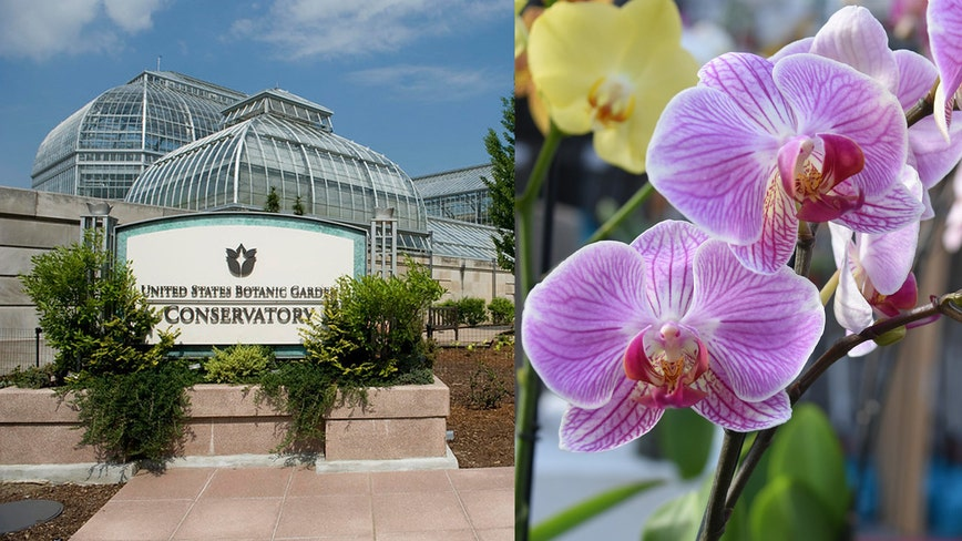 U.S. Botanic Garden celebrates 200th birthday with new exhibitions, features 600 orchids