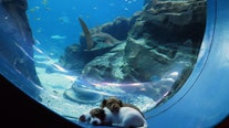 Puppies from Atlanta Humane Society visit Georgia Aquarium during COVID-19 closure