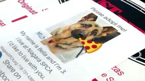 New York pizza shop puts photos of shelter dogs on pizza boxes to help them find a forever home