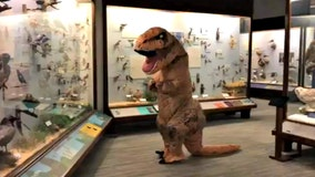 After penguins go viral, beloved Chicago dinosaur 'Sue' checks out Field Museum