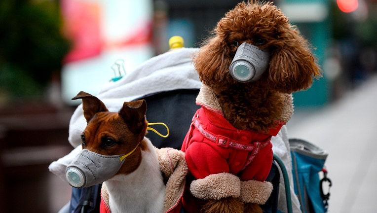 GETTY dog coronavirus