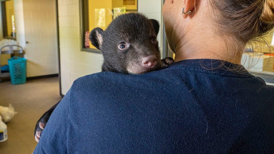 Orphaned-Bear-Cub-2.jpg