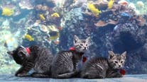Adorable kittens tour closed Georgia aquarium