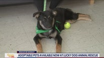 Adoptable pets looking for forever homes