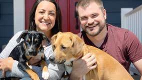 Animal rescue groups utilize virtual dog adoptions