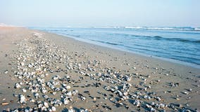 Outer Banks tourist ban brings surge of seashells to beaches