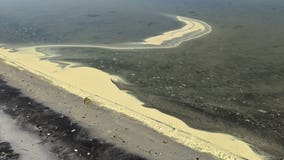 Pine pollen washes up on bayside of Assateague Island