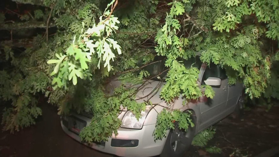 Tree-on-Cars-East-Point-1-1.png