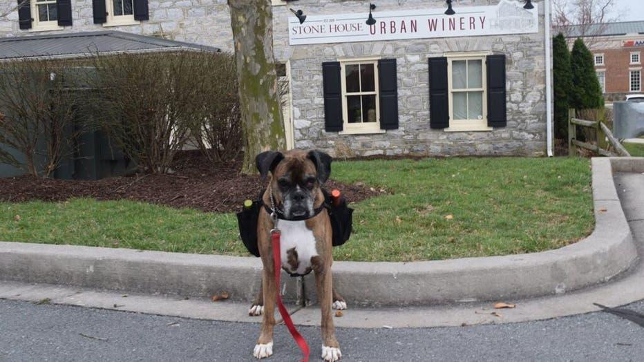 WineDog2.jpg