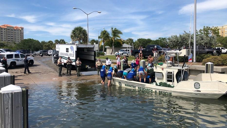 2020-05-09-manatee-rescue-in-Sarasota-FL-credit-Sarasota-Police-Department4.jpg