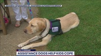 PAY IT FORWARD: Assistance dogs provide children with emotional support