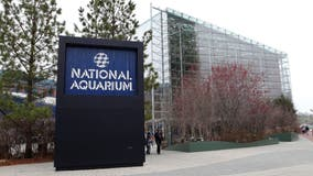 National Aquarium reopening next week