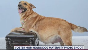 Homeward Trails Animal Rescue foster mom holds maternity photoshoot for dogs