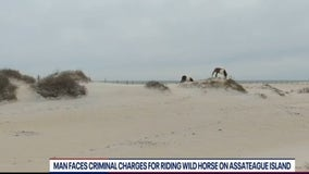 Man faces criminal charges for riding wild horse on Assateague Island