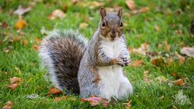 Squirrel tests positive for bubonic plague in Colorado