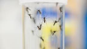 Mosquitoes flying free as health departments focus on virus