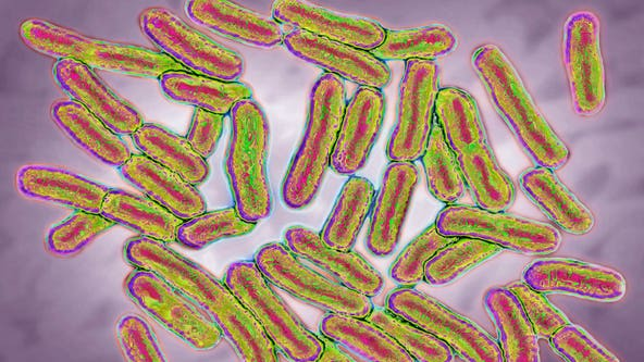 Salmonella outbreak detected in half of US states
