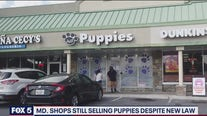Maryland shops still selling puppies despite new law
