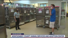 Montgomery County Animal Services and Adoption Center reopens for adoptions