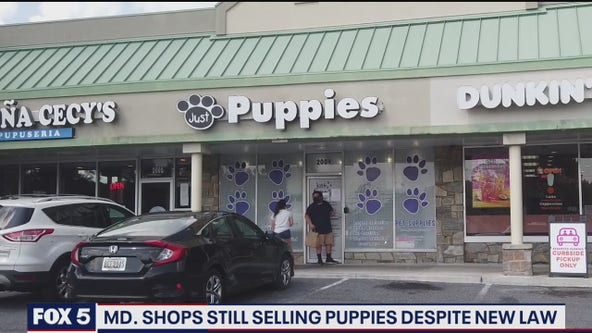 Maryland pet shops still selling puppies despite new ban