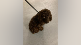 Arlington County officials seeking more information on abandoned dog