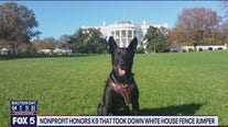 Nonprofit honors K9 that took down White House fence jumper
