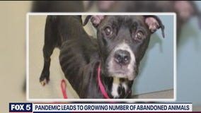 Pandemic leads to growing number of abandoned pets in Arlington