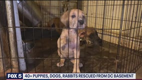 More than 40 puppies, dogs, and rabbits rescued from Southeast DC basement