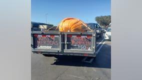 Minnesota man grows largest pumpkin in North America, 2,350 lbs