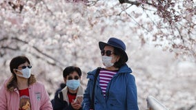 National Cherry Blossom Festival to proceed in 2021 with changes due to COVID-19; parade canceled