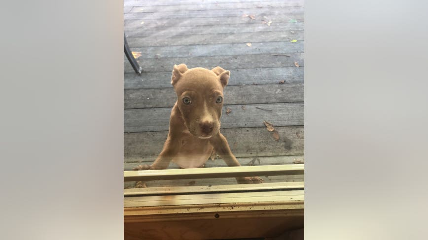 Montgomery County woman searching for missing puppy on track to become emotional support dog