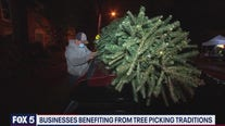 Businesses benefiting from tree picking traditions