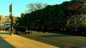 US Capitol Christmas Tree arrives in DC for 2020 holiday season