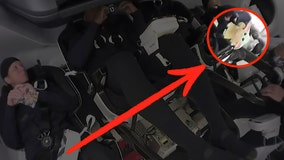 Baby Yoda spotted as zero-g indicator for SpaceX Crew-1 Mission