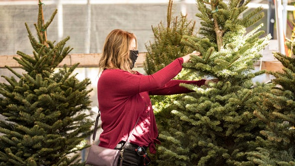 Real Christmas trees high in demand as people get into the holiday spirit early during the pandemic