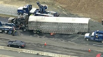 Tractor trailer jackknifes, catches fire killing several pigs it was hauling in Virginia