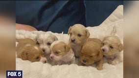 Fairfax County Police investigating 'puppy scam'