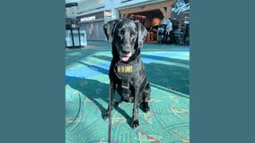 Canine due to transfer to Dulles Airport featured in 2021 TSA calendar