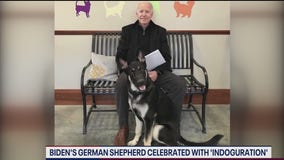 """Biden's rescue dog Major to be celebrated with """"Indoguration"""""""